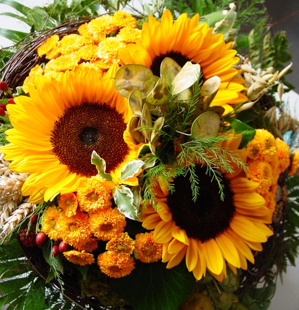Sonnenblumen_blog